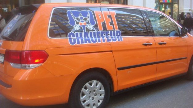 pet chauffeur in new york